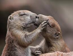 állatok csókolóznak.