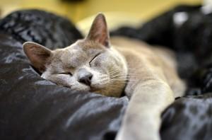 Macska pihen