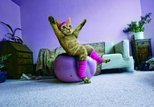 Macska tornázik