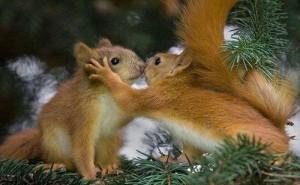 mókus szerelem