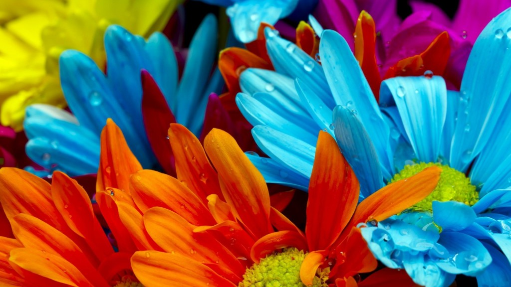Színe virágok - Kronobiológia