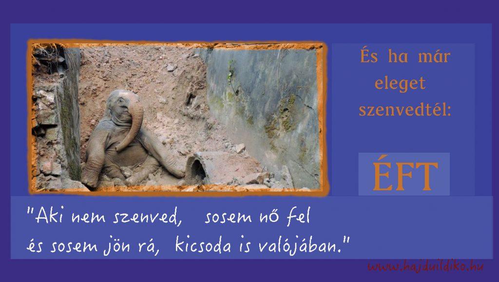 Aki nem szenved, sosem nő fel - elefánt a gödörben