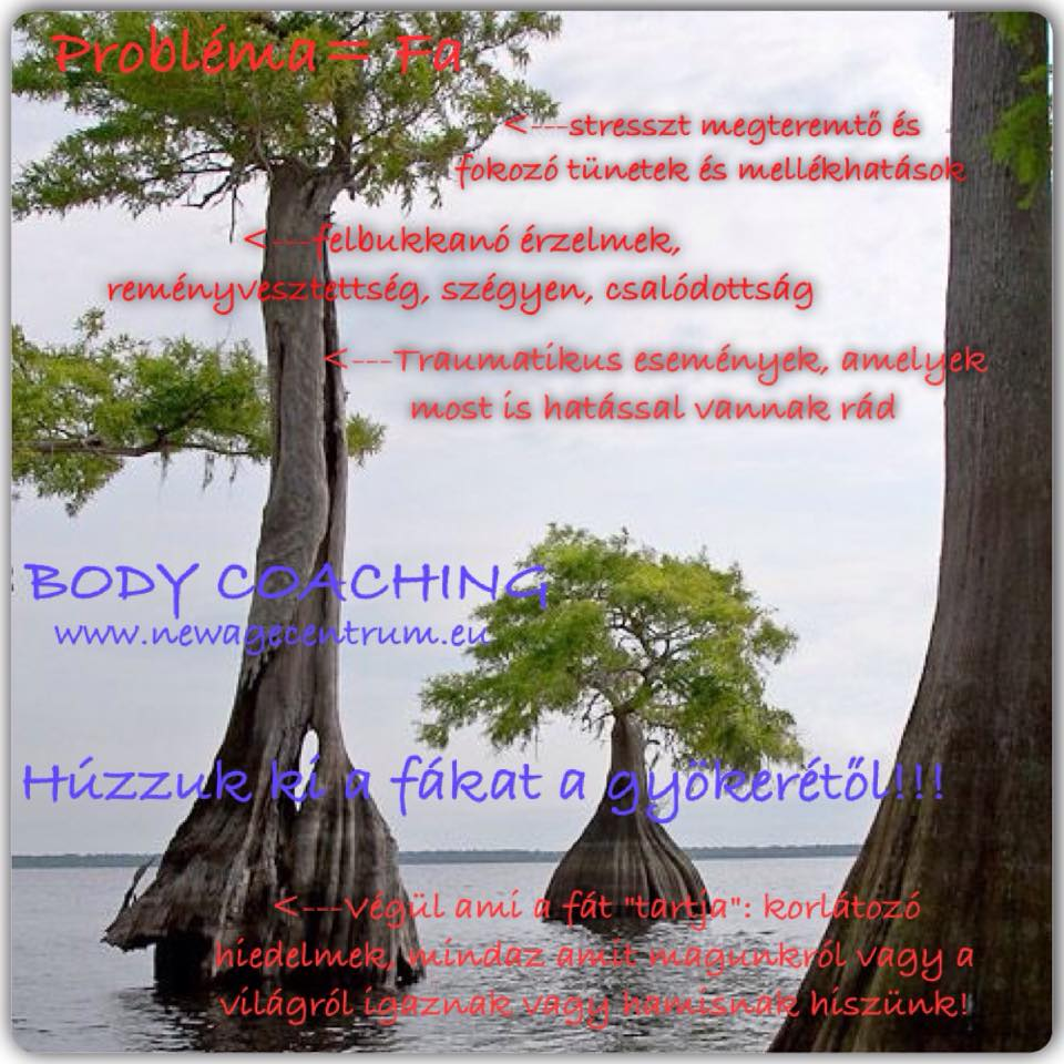 Body Coaching 11
