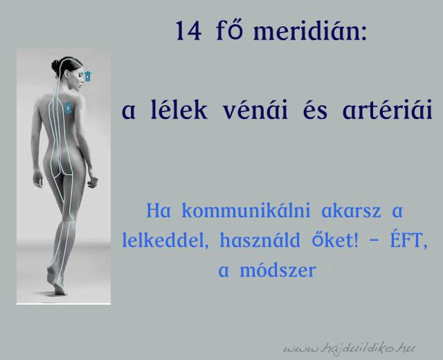 14 fő meridián, a lélek vénái és artériái