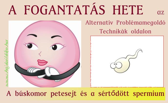 búskomor petesejt, sértődött spermium A petesejt és a hímivarsejt is információt, érzéseket hordoz, amelyek a megfogant életet befolyásolni fogják.