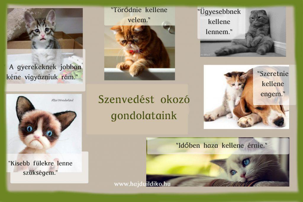 Szenvedést okozó gondolataink és a szenvedő cicák
