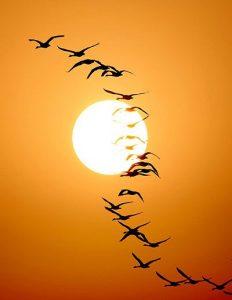 A gondolatok átsuhanó madárraj a házad felett.